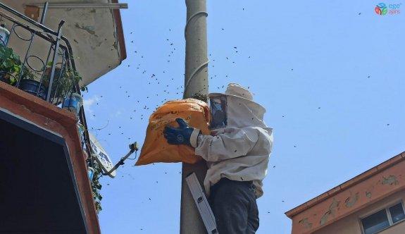 Elektrik direğine oğul veren arılar kovana alındı