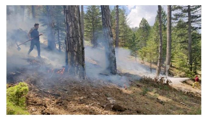 Muğla'da düşen yıldırımlar nedeniyle 12 günde 48 orman yangını çıktı