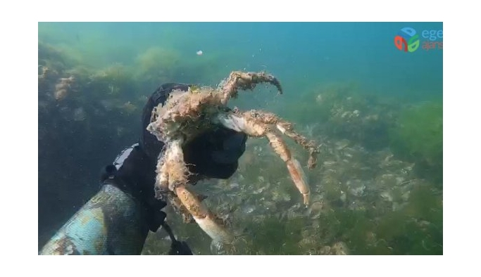 Müsilajın deniz altındaki tahribatı böyle görüntülendi