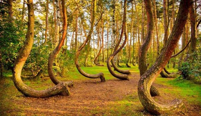 Dünyada karbon emisyonlarını dengelemeye yetecek kadar ağaç yok, asla olmayacak