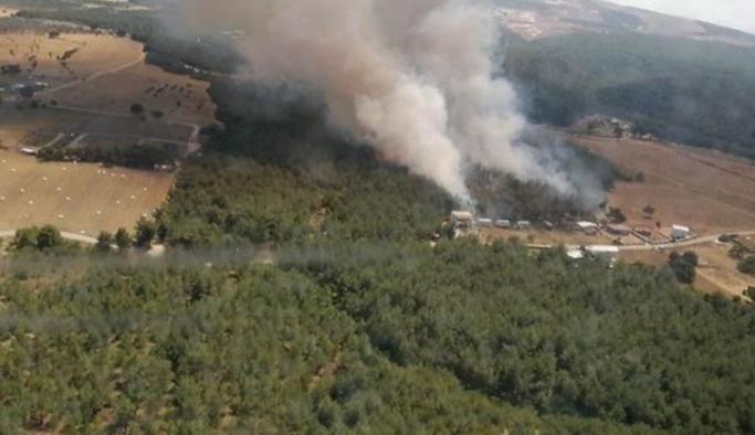 İzmir'in Bornova ilçesinde orman yangını çıktı