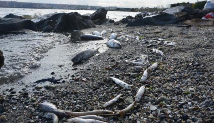 Küçükçekmece Gölü sahili kıyıya vuran ölü balıklarla doldu