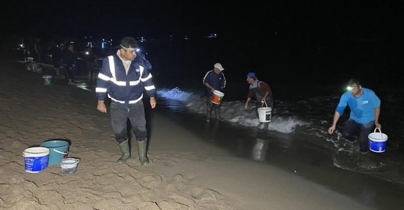Sahile vuran onlarca balığı elleriyle topladılar!