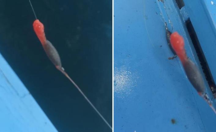 Balıkçıların oltasına takılan gizemli yapışkan kırmızı madde tedirginlik yarattı!