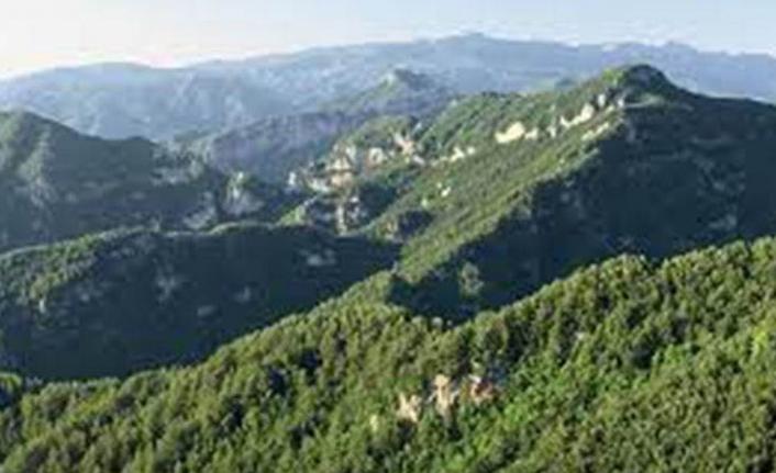 Bingöl'ün Karacehennem Ormanları'nda ağaç kesimleri 6. gününde