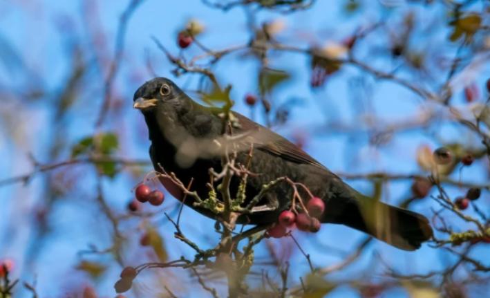 Doğada pandemi etkisi: Kuşların yüzde 80'i şehir merkezlerine indi
