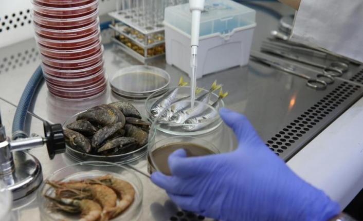 Müsilajın balıklara etkisi araştırılıyor... Dip balıklarını, karides ve midyeyi az tüketin