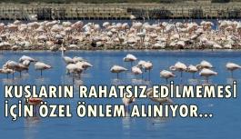 İzmir Kuş Cenneti'nde 20 bin flamingo kuluçkaya yattı
