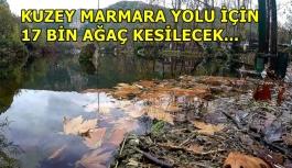 Kuzey Marmara Otoyolu için 17 bin ağaç daha kesilecek