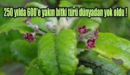 250 yılda 600'e yakın bitki türü dünyadan yok oldu !