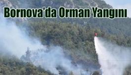 Bornova'da ormanlık alanda iki ayrı bölgede yangın