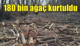 'ÇED olumlu' kararı iptal edildi, 180 bin ağaç kurtuldu