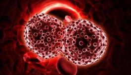Hangi kan grubu kansere karşı dirençli ?