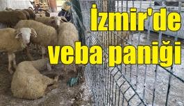 İzmir'de veba paniği