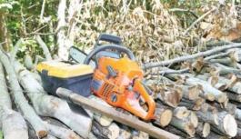 Şahin Dağları'nda ağaç katliamı!
