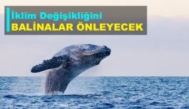 İklim değişikliğini balinalar önleyecek