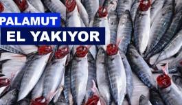 Küresel ısınma balık fiyatlarını etkiledi!