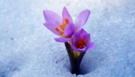 Baharın müjdecisi ilk cemre ne zaman düşer?