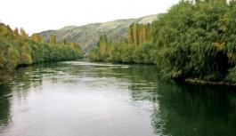 Sakarya Nehri'nde, atıklar nedeniyle balık ölümleri yaşandı