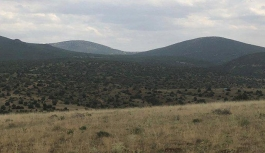 200 bin ağacın kaderini belirleyecek keşif yine iptal oldu