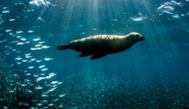Küresel ısınma sebebiyle hayvanlar kutuplara göç ediyor!