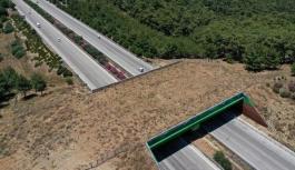 Yaban hayvanları için ekolojik köprü
