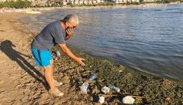 Altınkum Plajı'nda kirlilik uyarısı