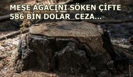 Tarihi meşe ağacını söken çifte 586 bin dolar ceza