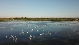 Van'da flamingoların konakladığı alan turizme kazandırılıyor