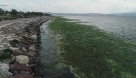 İzmir'in Karşıyaka sahilini deniz marulları kapladı