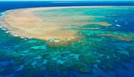 UNESCO korumasındaki mercanların yarısı yok oldu