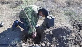 Erozyonu önlemek için ağaç dikildi