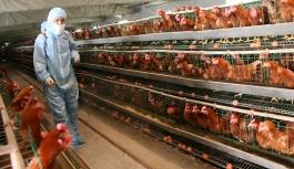 Hayvan öldürülmeden et üretilmeye başlandı! Kullanım için ilk onay Singapur'dan geldi