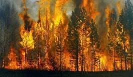 2020'nin yangın bilançosu: 29 bin futbol sahası kadar orman yandı