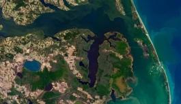 NASA, hayalet ormanları uzaydan görüntüledi