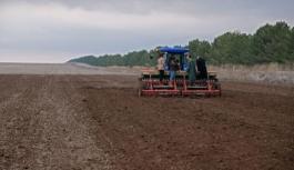 Susuz tarımda Konya'da umutlar yeşerdi