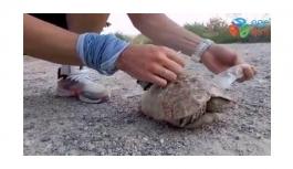 Siirt'te plastik şişeye sıkışan kaplumbağa vatandaşlar tarafından kurtarıldı
