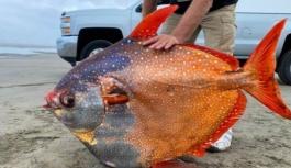 Bilinen tek sıcakkanlı balık olan Opah balığı, ABD'de karaya vurdu