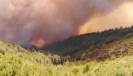 Yine bir orman yangını : Milas'ta...