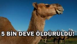 Avustralya'da 5 bin yabani deve, 'kuraklık...
