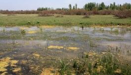 Eber Gölü'nün suyu çürüdü