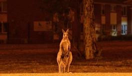 Avustralya yangınlarının ağır faturası ortaya çıktı: 3 milyar hayvan etkilendi