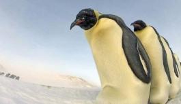 Güney Kutbu'nda imparator penguenlere...