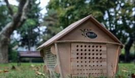 Hero Baby, 50 milyon arıyı doğaya kazandırmayı...