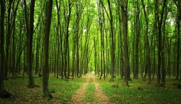 Ormanlarımız Sera Gazının etkilerinden koruyor