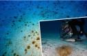 Kaş'ta 'yakıcı denizanası' istilası:...
