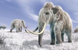 Araştırmaya göre Karadeniz'de buz devri devam...