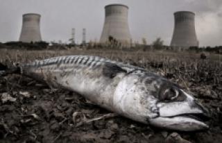 İklim değişikliği en büyük 6'ncı kitlesel...