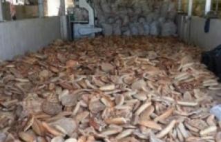 Alanya'da çöpe atılan ekmekler hayvanlara yem...