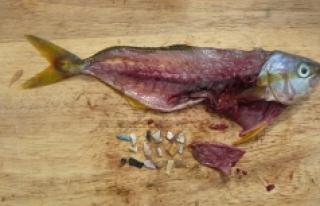 Balıklar mikroplastik yiyor, biz de balıkları!